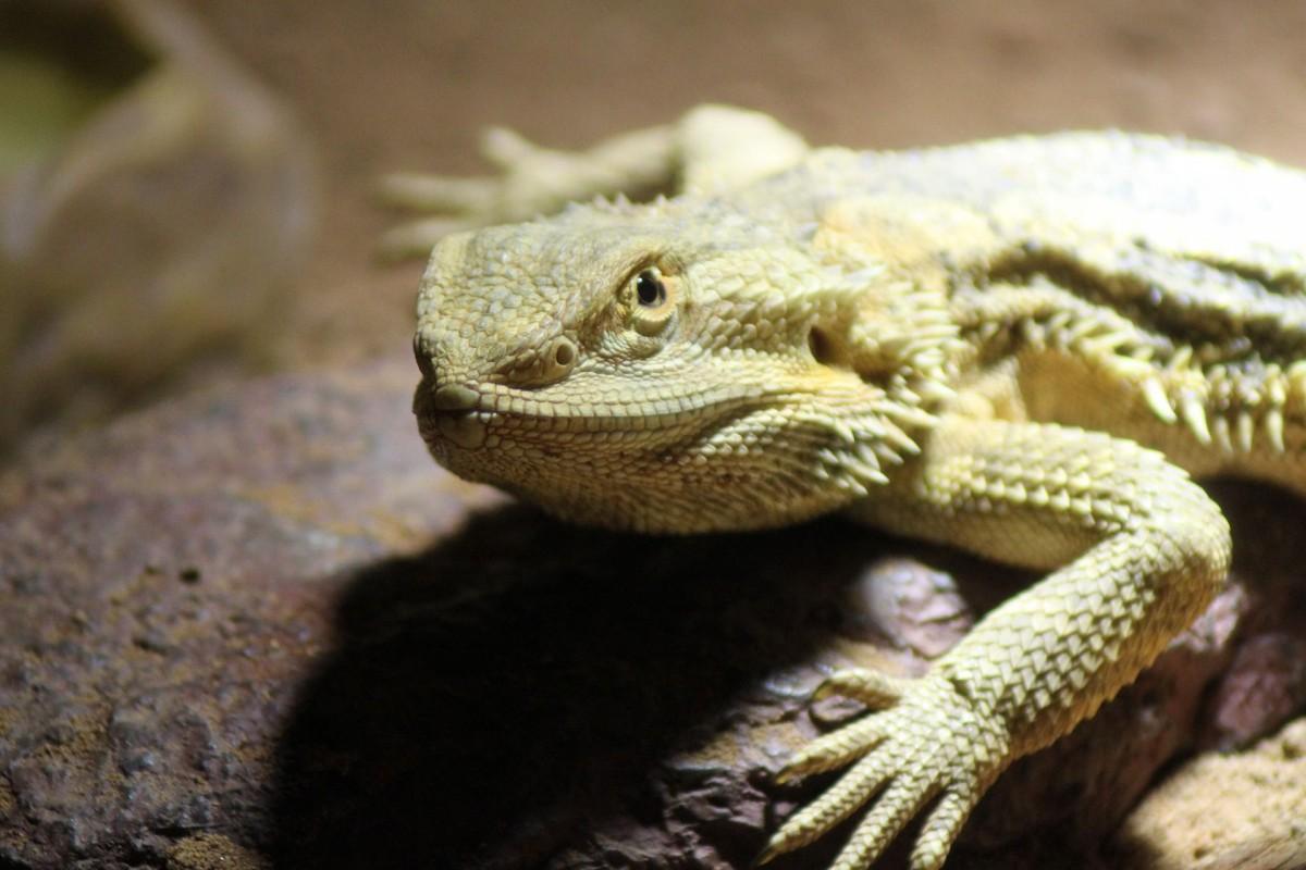 clase reptiles