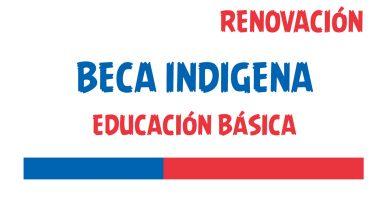 renovacion beca indigena educacion basica
