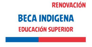 renovacion beca indigena educacion superior